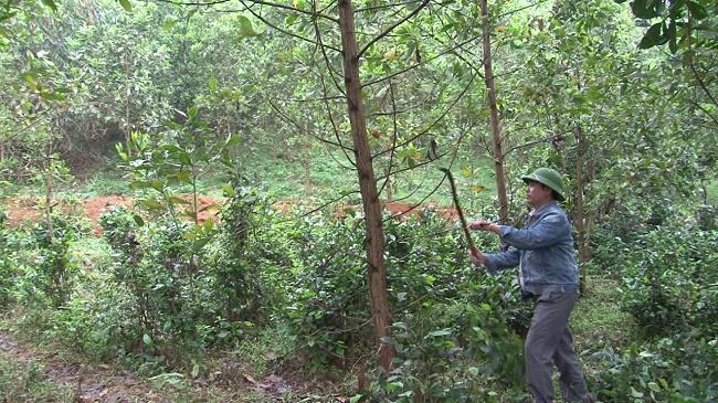 Giao đất, giao rừng